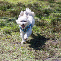 Prepare Your Pup! New McChesney Dog Park to open